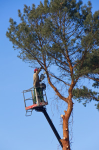 tree felling worker