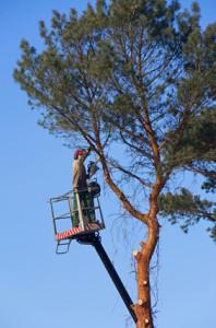 tree felling worker